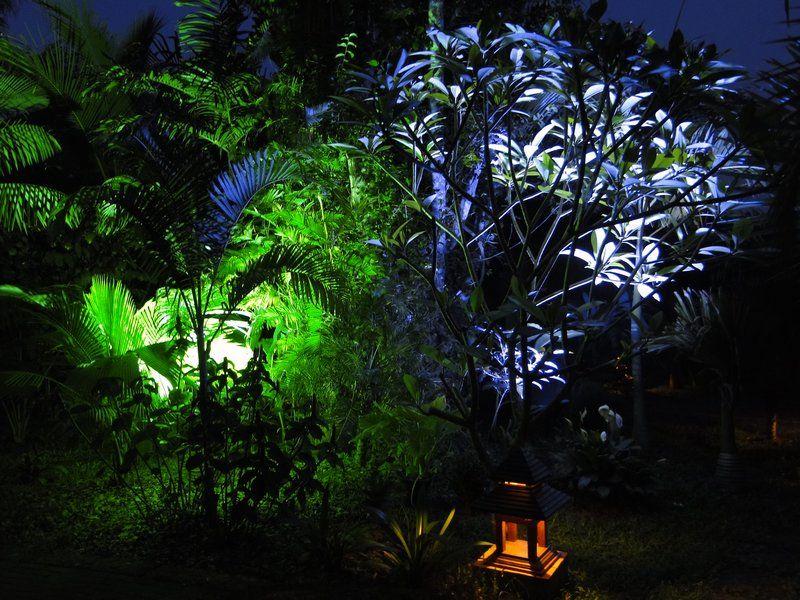 LE FORUM DES FOUS DE PALMIERS • Conseil pour spot éclairage arbre ...