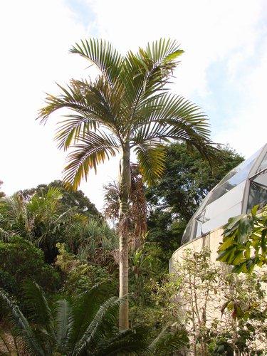 palmier 09