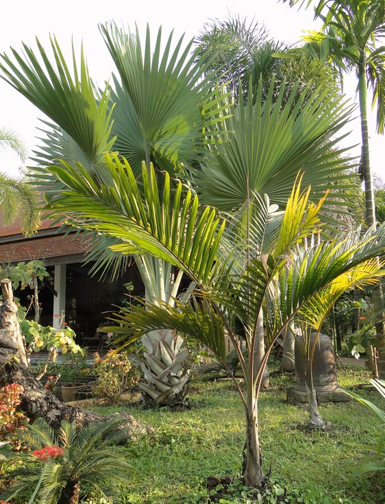 2011-12_066.jpg